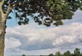 Trakt na Stankowo, w pobliżu jeziora Drużno